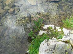 American Lake flowers