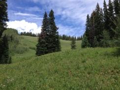 meadow AL
